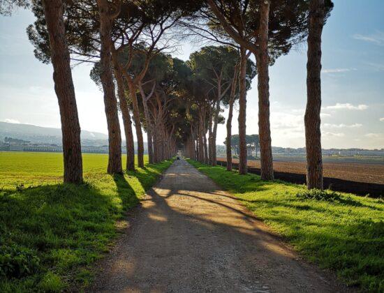 Tenuta Pantano Borghese – Agriturismo